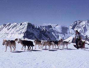 chiens de traineaux Méribel sport hiver méribel