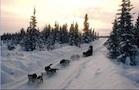 chiens de traineaux méribel